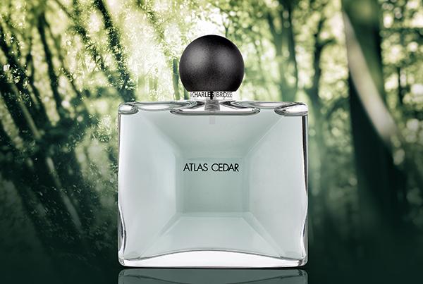 Atlas Cedar Parfum